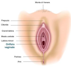 eiaculazione femminile