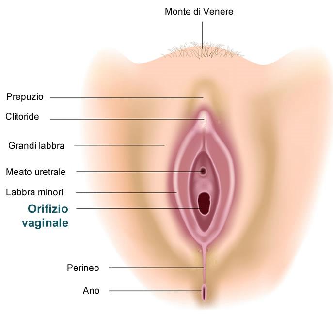 Sperma femminile squirting