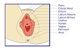 immagini vagina