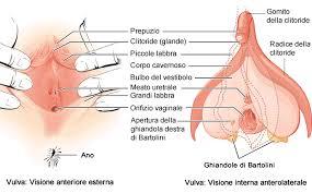 Foto di vagine grasse