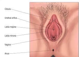 profondità vagina