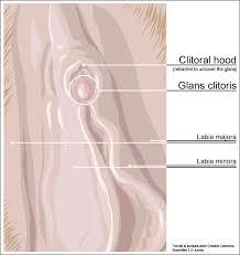 cappuccio clitorideo