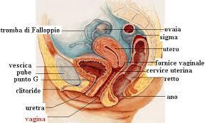 foto vagina