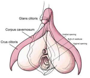 clitoride immagini